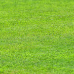 人工芝のフランチャイズ募集一覧