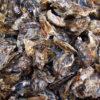 牡蠣のフランチャイズ募集一覧
