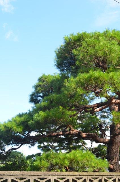 庭木剪定・伐採のフランチャイズ募集一覧