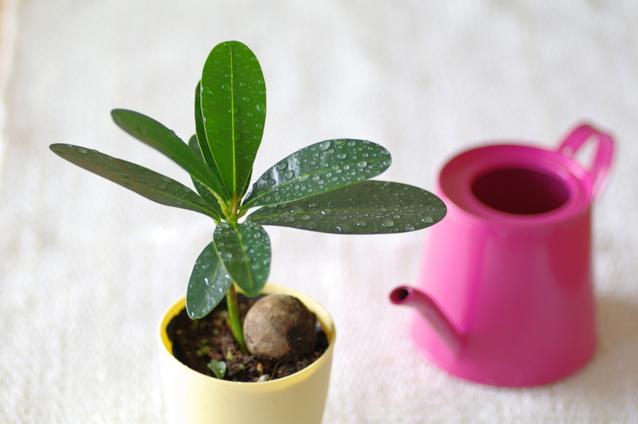 観葉植物のフランチャイズ