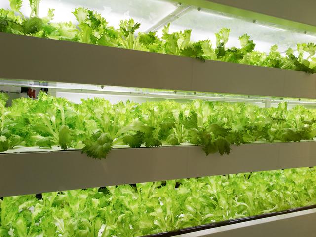 植物工場・野菜工場のフランチャイズ